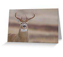 Whitetail Buck Portrait featuring rut swollen neck Greeting Card