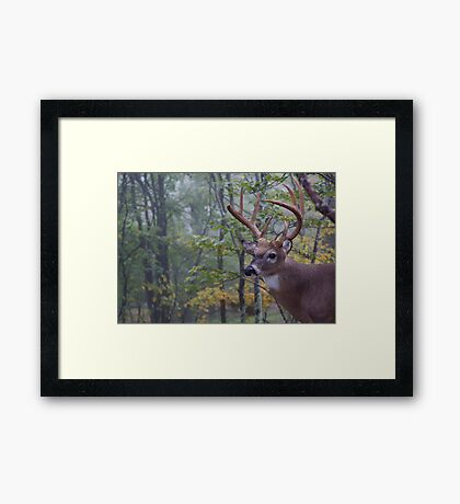 Whitetail Buck Deer Portrait in deciduous forest habitat Framed Print