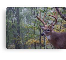 Whitetail Buck Deer Portrait in deciduous forest habitat Canvas Print
