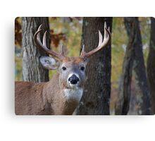 Whitetail Buck Deer Portrait in deciduous forest  Canvas Print