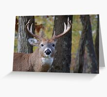 Whitetail Buck Deer Portrait in deciduous forest  Greeting Card