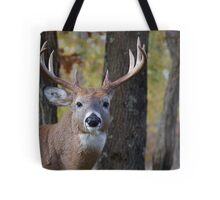 Whitetail Buck Deer Portrait in deciduous forest  Tote Bag