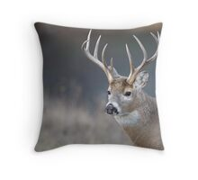 White-tailed Buck Deer with non-typical antlers, portrait Throw Pillow