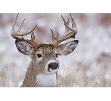 White-tailed Buck Deer with non-typical antlers, winter portrait Photographic Print