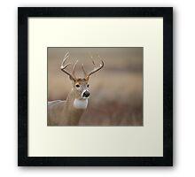 Whitetail Buck Portrait   Framed Print