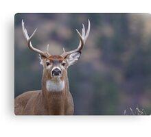 Whitetail Deer Portrait, Trophy Buck Canvas Print