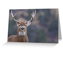Whitetail Deer Portrait, Trophy Buck Greeting Card
