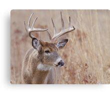 Whitetail Deer Portrait, Trophy Buck in prairie habitat Canvas Print