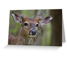 Whitetail Deer Portrait, Buck with newly emergent antlers Greeting Card