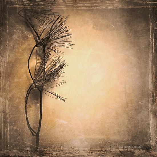 Zen Life by Jeanette Serrat