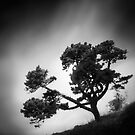 Tree of Life by howpin