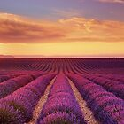Lavender Fields - Limited Edition Fine Art Photograph by Jarrod Castaing