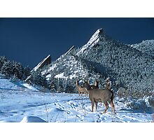 Deer Crossing Photographic Print