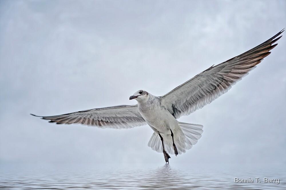 Galveston Gull by Bonnie T.  Barry