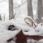 Snow by thatKellygirl