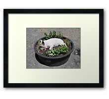 Potted Dog Framed Print