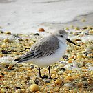 Sandpiper by Sharon Woerner