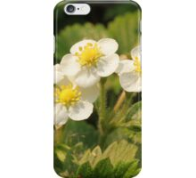 strawberry blossoms with dew iPhone Case/Skin