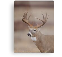 Whitetail Deer Portrait - Trophy Buck Metal Print
