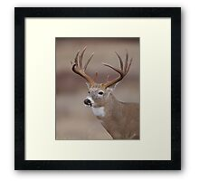 Whitetail Deer Portrait - Trophy Buck Framed Print
