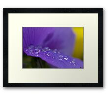 Purple Magnified Framed Print