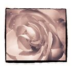 Orange Rose with Border-sepia by gloriart