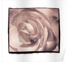 Orange Rose with Border-sepia Poster