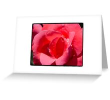 Red Rose in Summertime Greeting Card