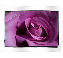 Flimsy, flowy, Dark Pink Rose Poster