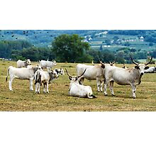 Herd Photographic Print