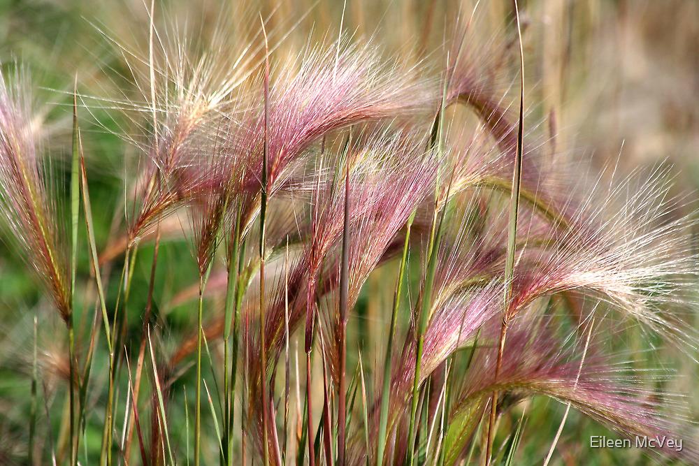 Pink Grasses by Eileen McVey