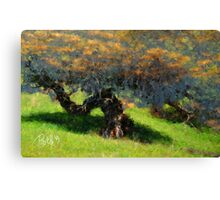 Sunset Tree Canopy Canvas Print