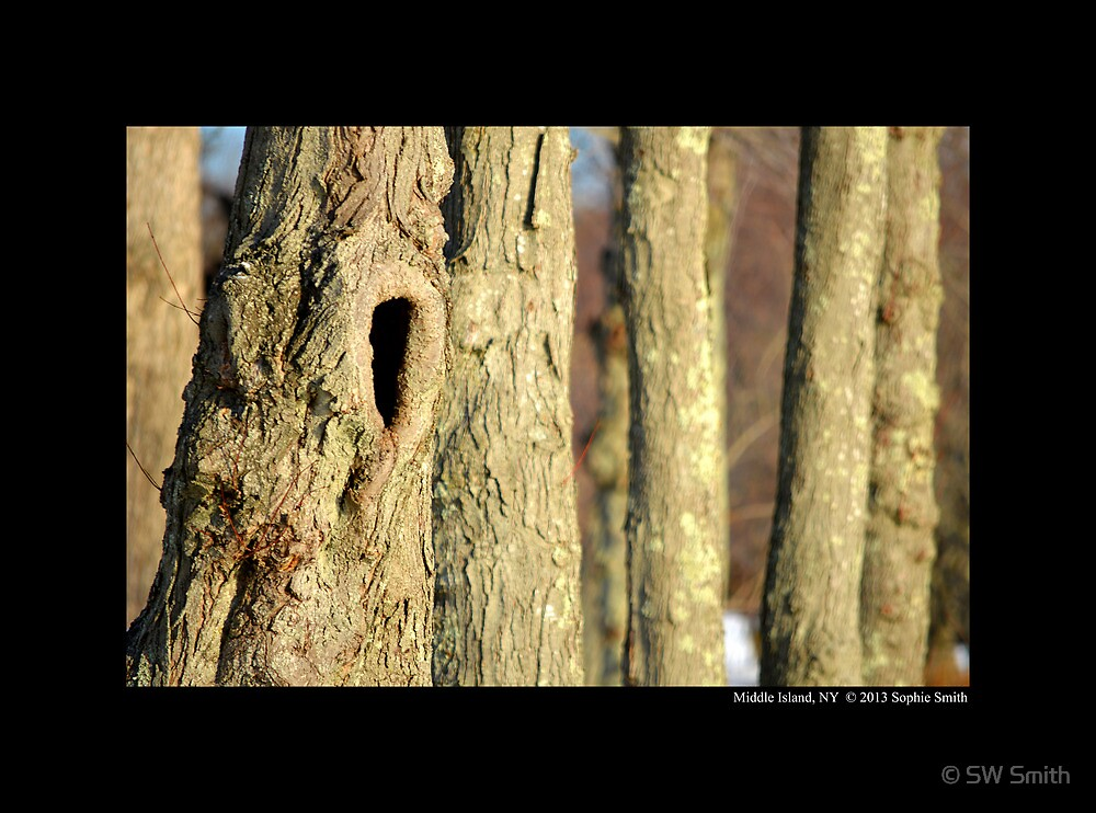 Tree Hollow by © Sophie W. Smith