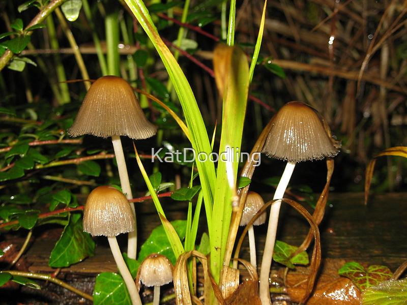 Dainty Mushrooms by KatDoodling
