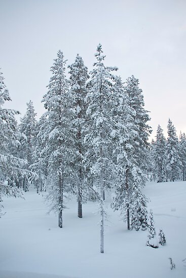 Lapland by Tim Topping
