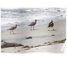 Little Suction Cup Beaks Poster