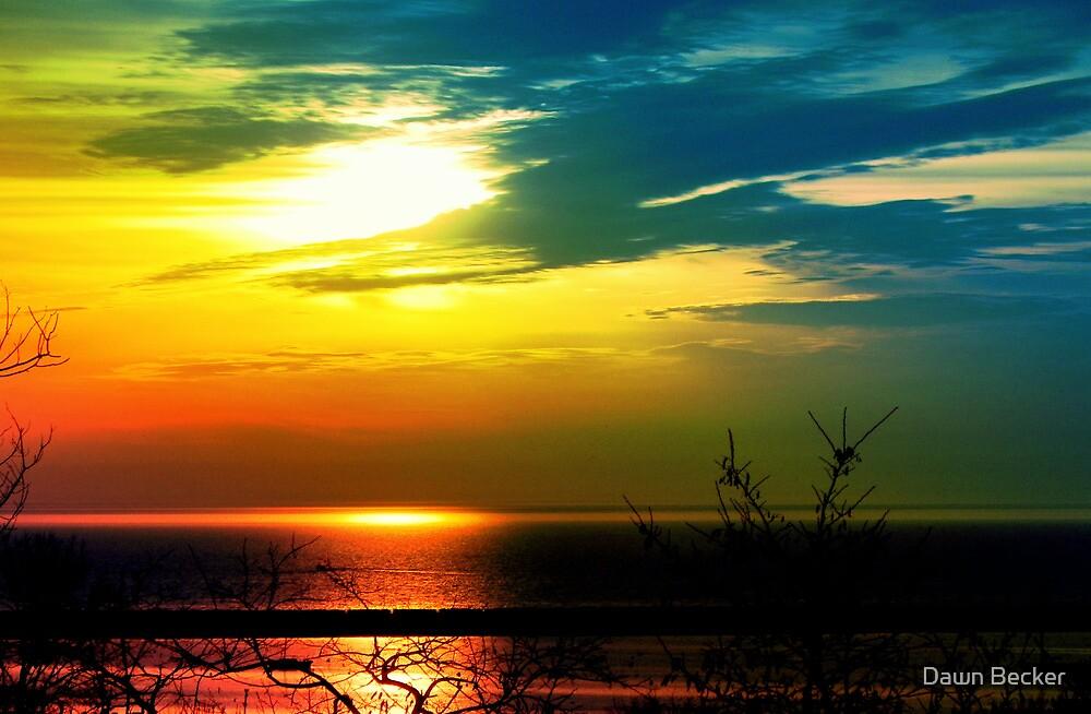 Morning Glory © by Dawn Becker