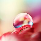 Dreamy Droplet by Sharon Johnstone