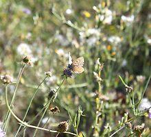 La Farfalla nei Fiori by Andrea  Muzzini