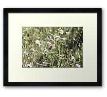 La Farfalla nei Fiori Framed Print