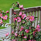 Pink Flowers By The Bench by Cynthia48