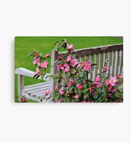 Pink Flowers By The Bench Canvas Print