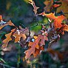 November by autumnwind