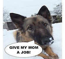 German Shepherd Give My Mom A Job Photographic Print