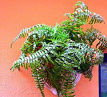 The Ladder Fern by Fara