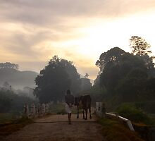 Morning stroll in Munnar by EveW