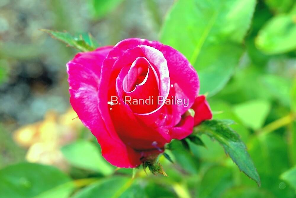 Hot pink rosebud by ♥⊱ B. Randi Bailey