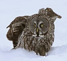 Startled by Heather King
