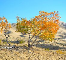 Trees In The Desert by Lora Lee