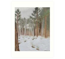 Galena Creek Forest (Plein-air Study) Art Print